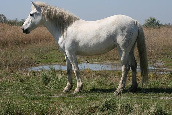 manade a Eyragues-elevage de taureaux Camargue-elevage de chevaux Camargue-location de salle a Eyragues-vente de paillotes-course de taureaux-eleveur de taureaux