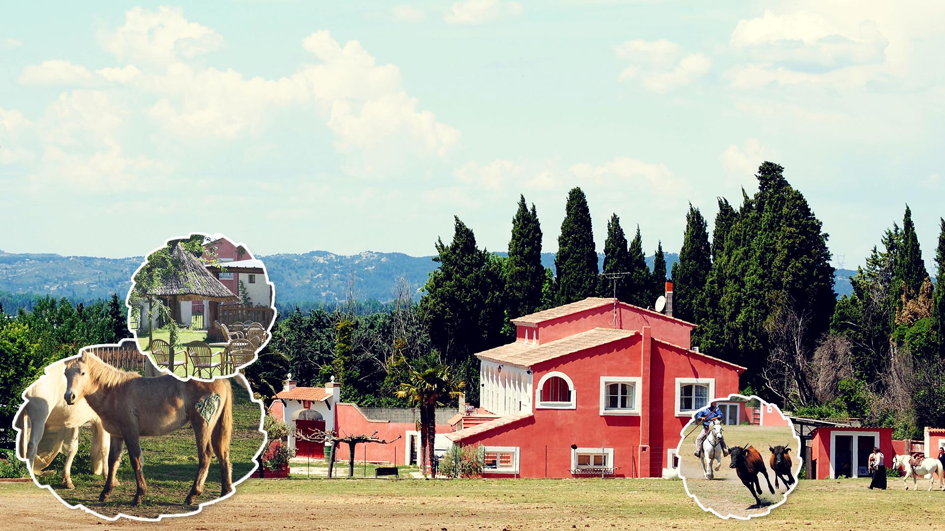 manade a Eyragues-elevage de taureaux Camargue-elevage de chevaux Camargue-location de salle a Eyragues-vente de paillotes-courses de taureaux-eleveur de taureaux